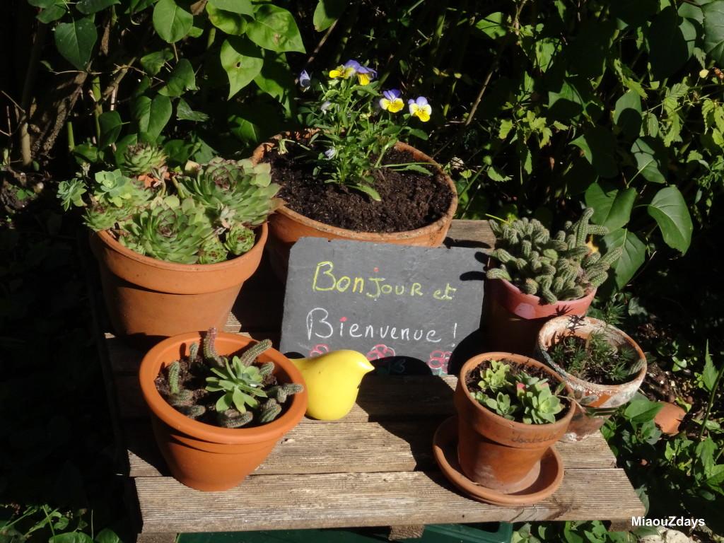 Mon jardin le 1 er octobre 2015 miaouzdays for Jardin lune octobre 2015