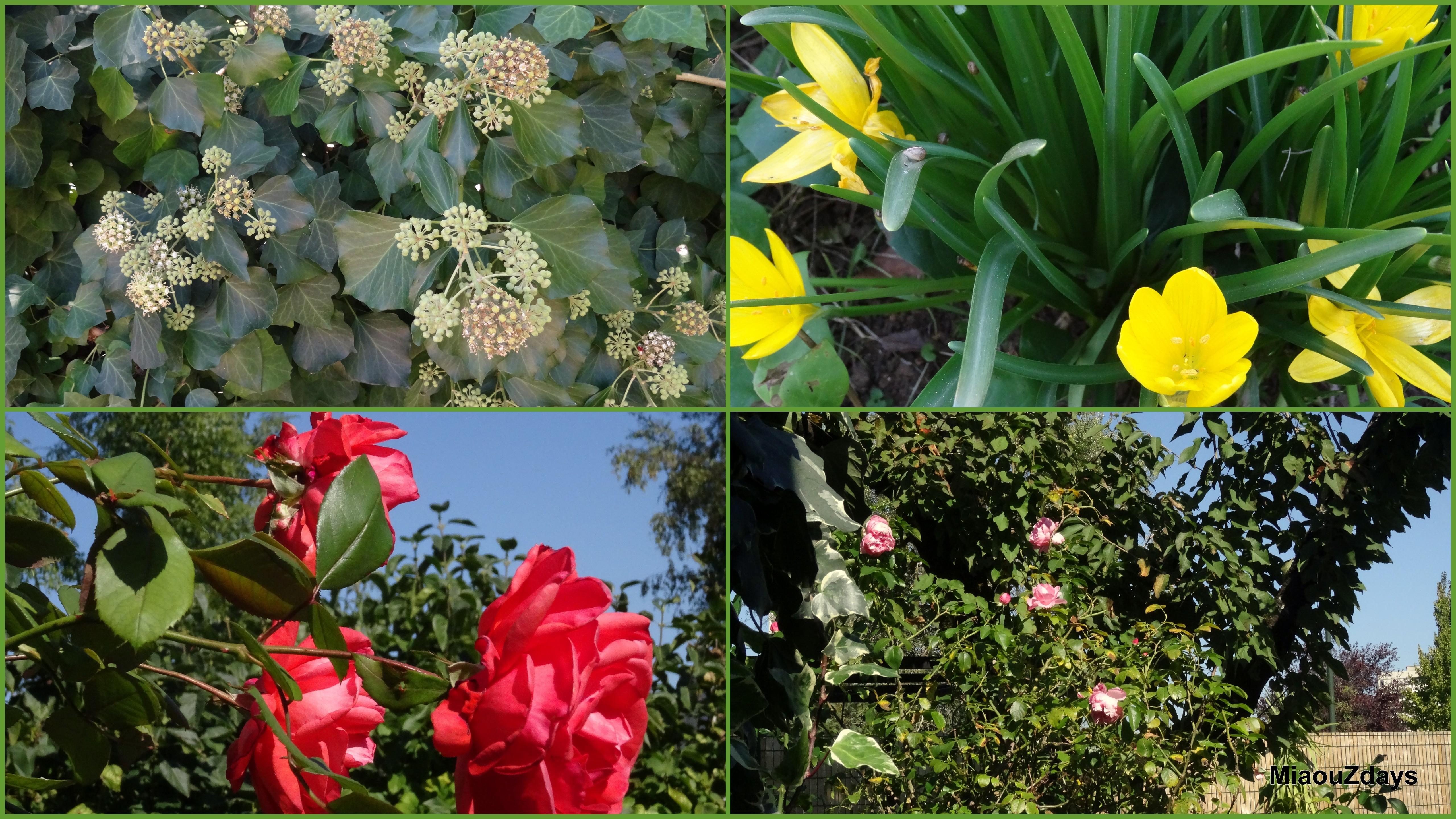 jardin oct 15 barrobjectif1