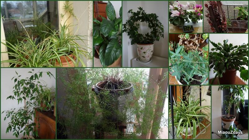 plantes angouleme mars2016
