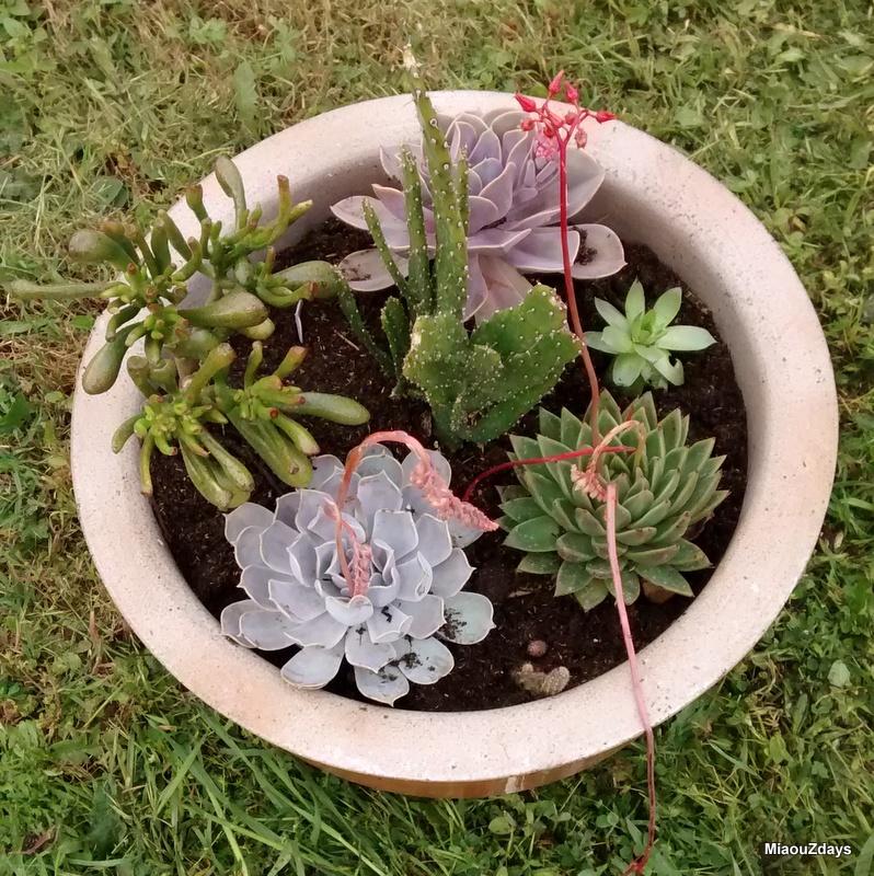 succulentes A