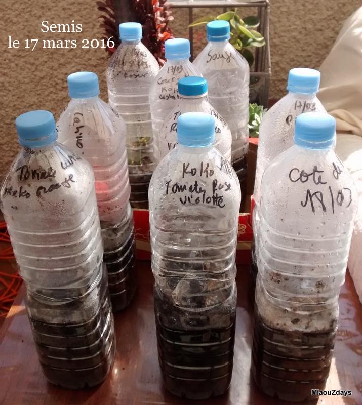 semis en bouteille debut