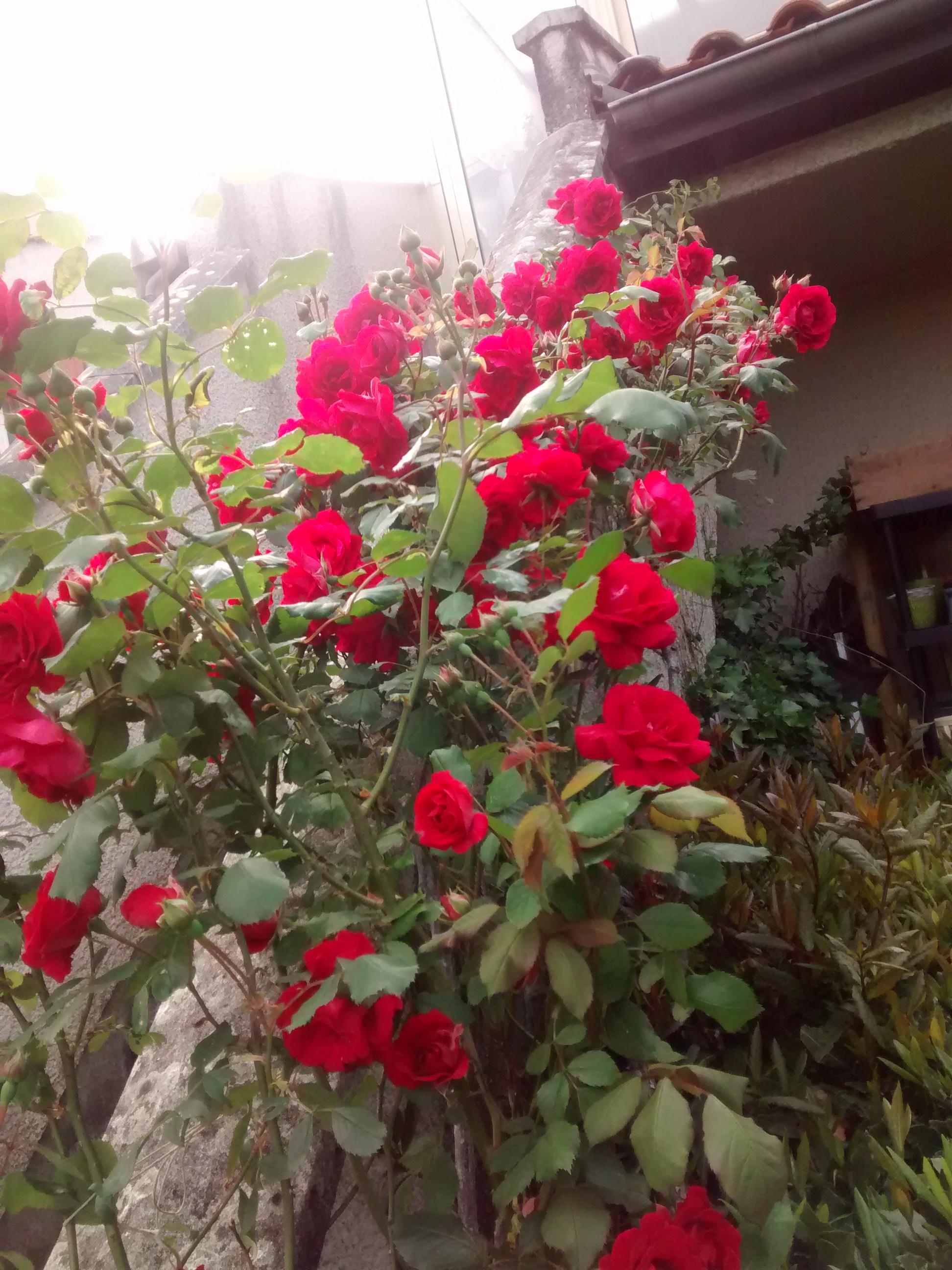 escalier roses rouges 16