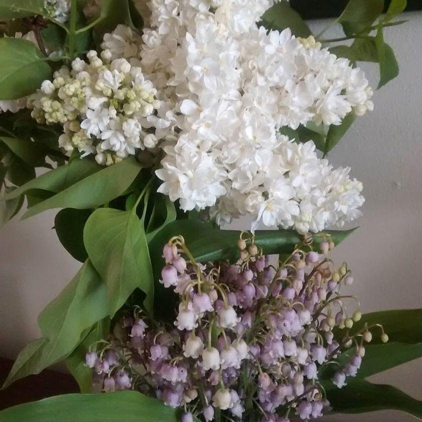 lilas blanc muguet rose16